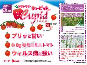 トマトベリーキューピット苗販売用