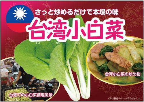 青果販売用ポップ台湾小白菜