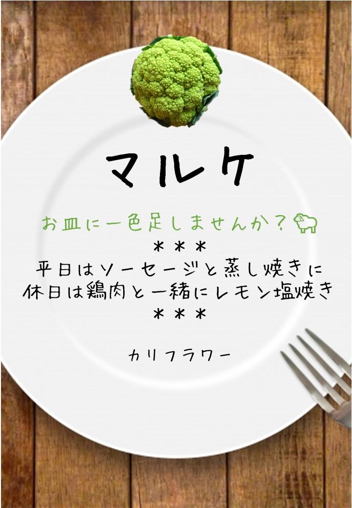食卓風マルケ写真入りPOP