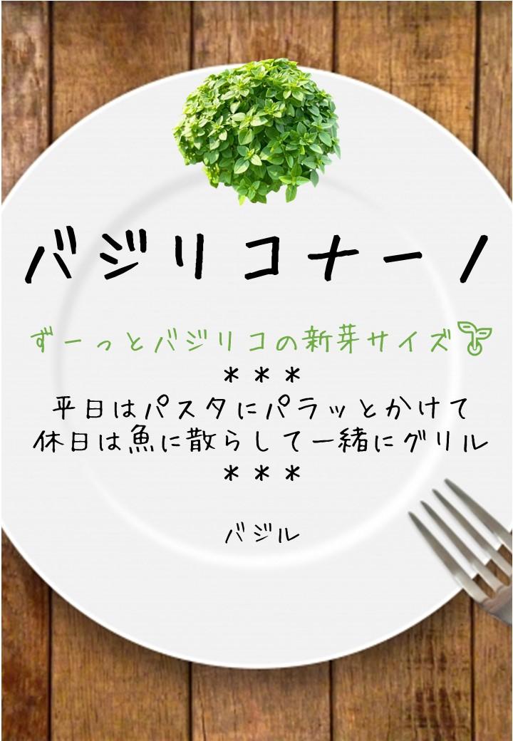 食卓風バジリコナーノ写真入りPOP