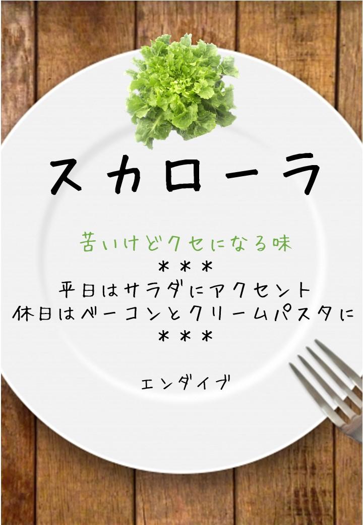 食卓風スカローラ写真入りPOP