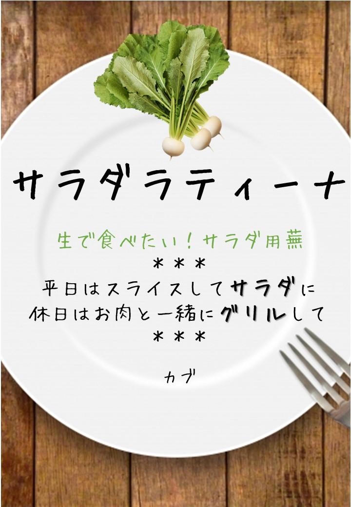 食卓風サラダラティーナ写真入りPOP