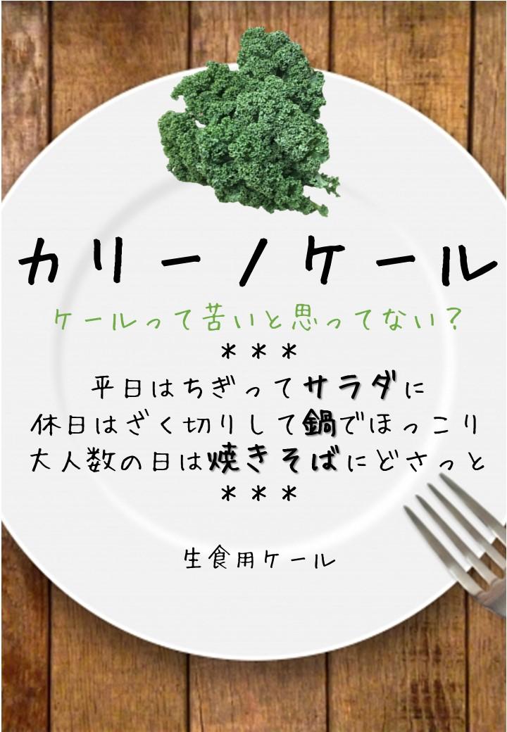 食卓風カリーノケール写真入りPOP